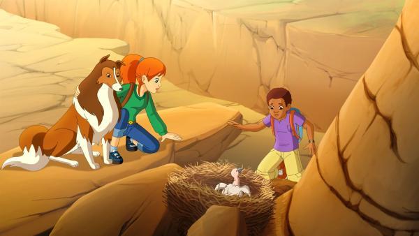 Dank Lassie, die die Eule in die Flucht geschlagen hat, kann Harvey (re.) das Kondorbaby aus dem Nest retten.   Rechte: ZDF/Classic Media/DC Entertainment/Superprod