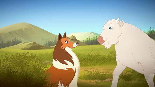 Lassie freundet sich mit dem weißen Büffelkalb (rechts) an. | Rechte: ZDF/Superprod/ZDFE