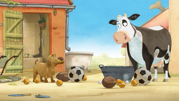 Lieselotte sucht einen geeigneten Ball zum Spielen.   Rechte: ZDF/WunderWerk