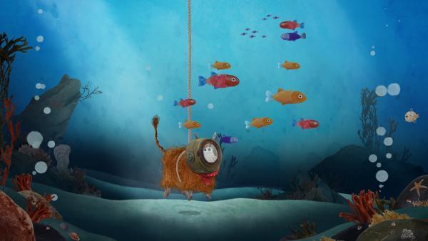 Barne staunt nicht schlecht, als er die vielen bunten Fische sieht.   Rechte: KiKA/Sixteen South
