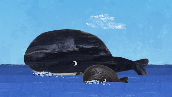 Auf der Fahrt nach Strandschatz Eilandbegegnen Lily und Salty einer Walmutter mit einem Kalb.  | Rechte: KiKA/Sixteen South