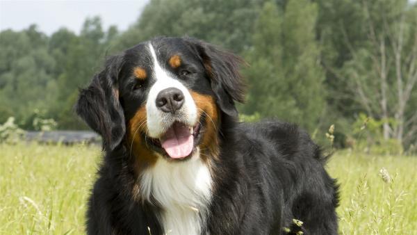 Berner Sennenhund Keks ist für sein nächstes Abenteuer bereit. Mal sehen, wen er heute trifft? | Rechte: ZDF/Zia Ziarno