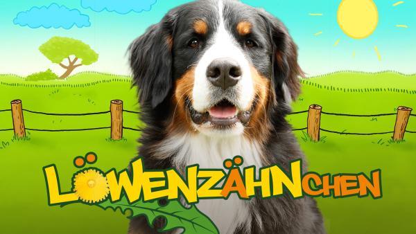 Löwenzähnchen auf zdftivi.de | Rechte: ZDF