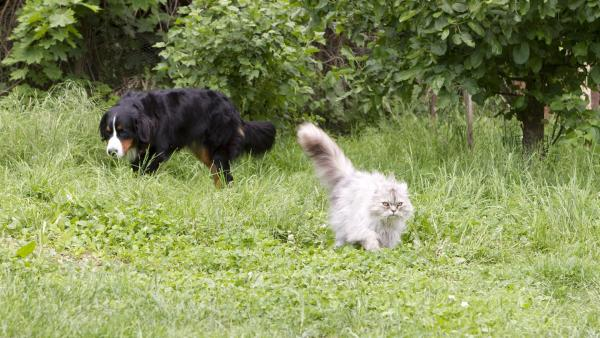 Keks trifft auf die Katze Karla. | Rechte: ZDF/Zia Ziarno