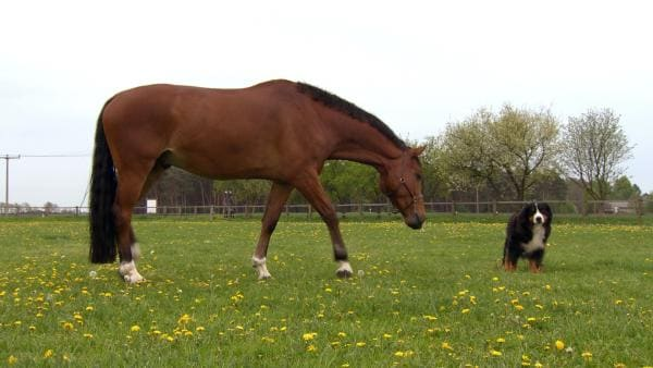 Keks erkundet die Weide in seiner Nähe und lernt Fiona Fohlen kennen. | Rechte: ZDF/Studio TV