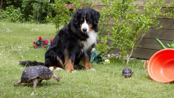 Selina Schildkröte ist mit ihrer Oma im Nachbarsgarten unterwegs. Dort treffen sie Keks. | Rechte: ZDF/Zia Ziarno