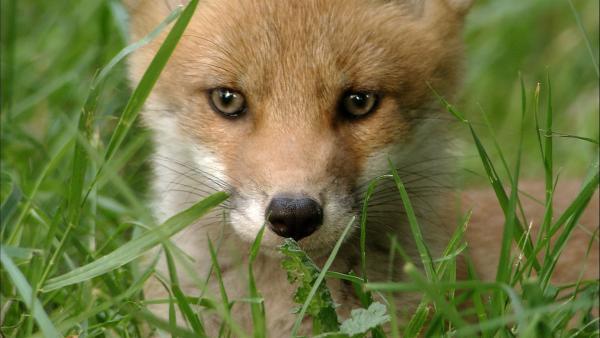 Hund Keks trifft im Wald Finya Fuchs und ihre Geschwister. | Rechte: ZDF