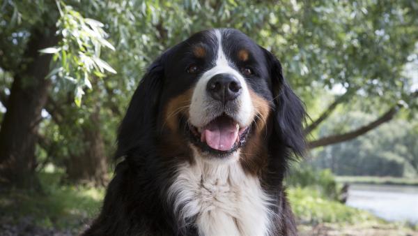 Hund Keks hört ein Geräusch im Wald und folgt seiner guten Spürnase, bis er auf Diego Dachs trifft. | Rechte: ZDF/Zia Ziarno