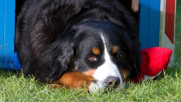 Keks liegt in seiner Hundehütte und träumt von seinem nächsten Abenteuer. | Rechte: ZDF/Zia Ziarno