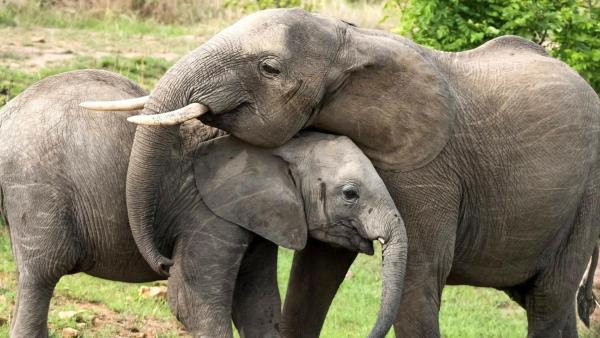 Elefant | Rechte: ZDF