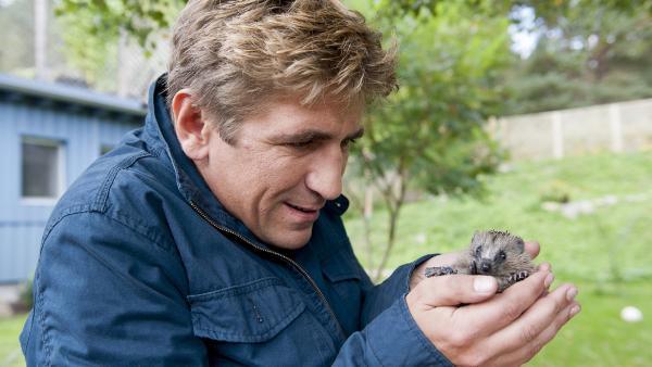Fritz Fuchs (Guido Hammesfahr) rettet kleine Igelbabys. | Rechte: ZDF/Antje Dittmann
