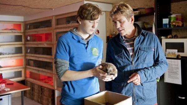 Fritz Fuchs (Guido Hammesfahr) und Lukas (Leonard Carow) von der Igelstation versorgen die verletzte Igelmutter. | Rechte: ZDF/Antje Dittmann