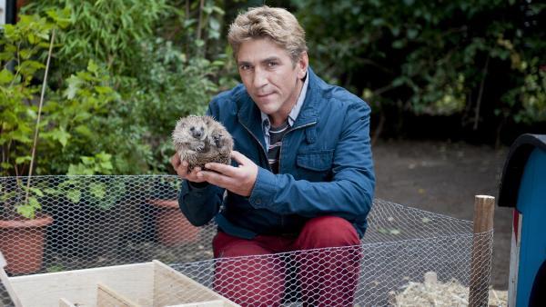 Fritz Fuchs (Guido Hammesfahr) mit seinem neuen Mitbewohner. Warum will der kleine Igel nicht fressen? Fühlt er sich nicht wohl?   Rechte: ZDF/Antje Dittmann