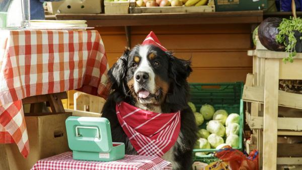 Hund Keks hilft seinem Herrchen am Kiosk, wo und wie er kann. | Rechte: ZDF/Antje Dittmann