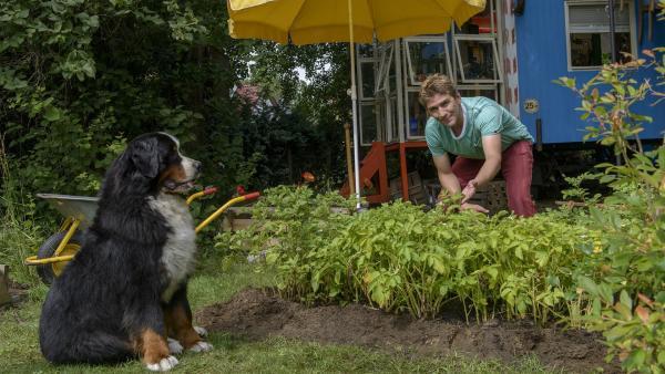 Fritz Fuchs (Guido Hammesfahr) züchtet eine uralte Kartoffelsorte nach. Hund Keks freut sich schon auf die Ernte. | Rechte: ZDF/Antje Dittmann