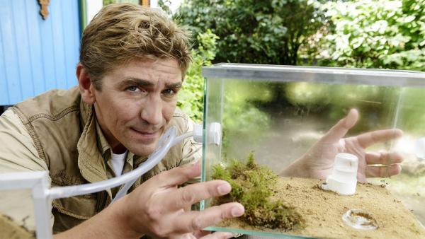 Fritz Fuchs (Guido Hammesfahr) nimmt ein  unbekanntes Ameisenvolk in einem besonderen Formikarium in Pflege. | Rechte: ZDF/Antje Dittmann