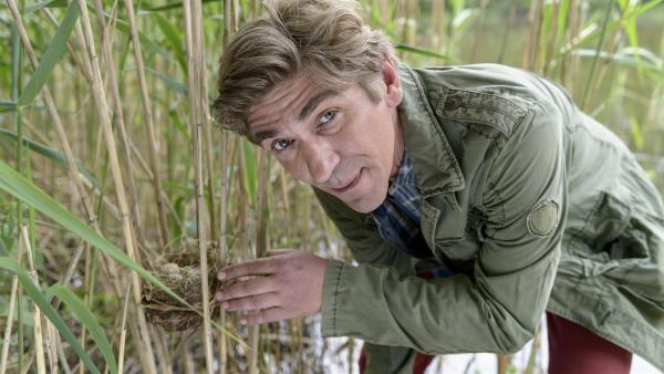 Fritz Fuchs (Guido Hammesfahr) hat ein äußerst seltene Entdeckung gemacht:  ein Nest mit einem Kuckucksei. | Rechte: ZDF/Antje Dittmann