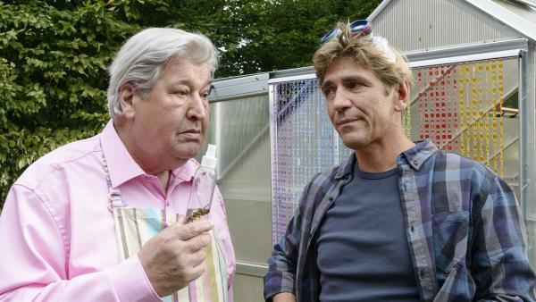 Nachbar Paschulke (Helmut Krauss, l.) und Fritz Fuchs (Guido Hammesfahr, r.) überlegen gemeinsam, was sie gegen die plötzliche Fliegenplage tun können. | Rechte: ZDF/Antje Dittmann
