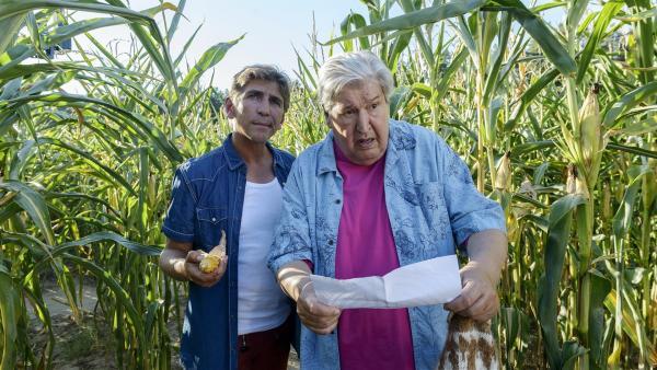Fritz Fuchs (Guido Hammesfahr, l.) und Nachbar Paschulke (Helmut Krauss, r.) haben sich hoffnungslos im Maisfeld verirrt. | Rechte: ZDF/Antje Dittmann