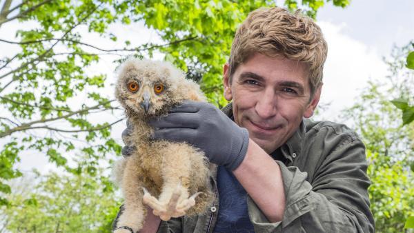Was bist du denn für ein kleiner Wuschel? Fritz Fuchs (Guido Hammesfahr) hat die junge Eule bei sich aufgenommen, als die Auffangstation für Tiere geschlossen wurde. | Rechte: ZDF/Ole Schwarz