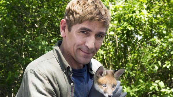 Der kleine Fuchs hat Zutrauen zu Fritz Fuchs (Guido Hammesfahr) gefasst. Er hat ihn bei sich aufgenommen, als die Auffangstation für Tiere geschlossen wurde. | Rechte: ZDF/Ole Schwarz