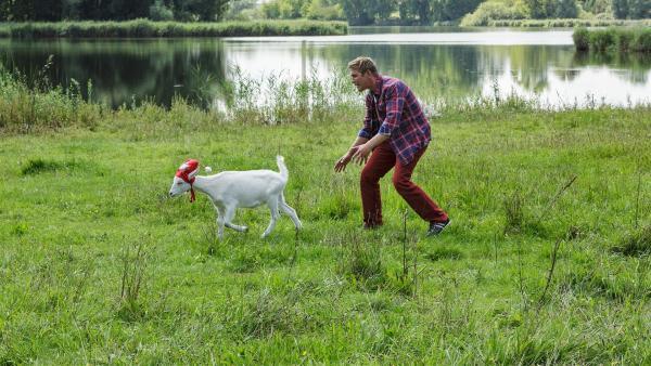 Fritz Fuchs (Guido Hammesfahr) versucht, Ziege Rosalie einzufangen. Sie soll die nächsten Tage bei ihm wohnen, damit er sie vor den Entführern beschützen kann. | Rechte: ZDF / Antje Dittmann