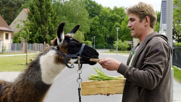 Fritz Fuchs (Guido Hammesfahr) steht mit einem Lama auf der Straße und hält einen Korb mit Futter in der Hand. | Rechte: ZDF/Antje Dittmann