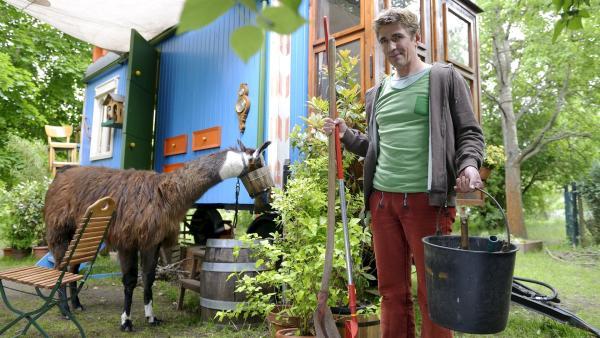 Durch eine Verwechslung ist Fritz Fuchs (Guido Hammesfahr) plötzlich zum Lama-Besitzer aufgestiegen. Er versucht alles, damit das Anden-Tier sich bei ihm heimisch fühlt. | Rechte: ZDF/Antje Dittmann