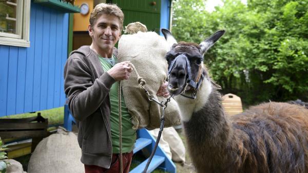Durch eine Verwechslung ist Fritz Fuchs (Guido Hammesfahr) nun stolzer Besitzer eines Lamas. Das geschickte Tier hat anscheinend Spaß daran, schwere Säcke zu transportieren. | Rechte: ZDF/Antje Dittmann