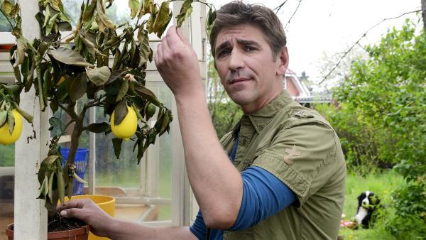 Ob Fritz Fuchs (Guido Hammesfahr) es schafft, das verkümmerte Zitronenbäumchen mit seinem grünen Daumen zu retten?   Rechte: KiKA/Bildredaktion