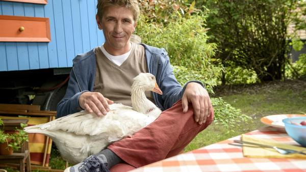 Fritz Fuchs (Guido Hammesfahr) nimmt die Gans Gloria vorübergehend bei sich auf - mit abenteuerlichen Folgen.   Rechte: ZDF/Antje Dittmann