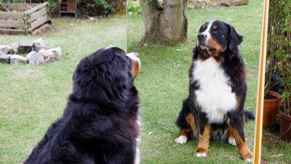 Hund Keks möchte seinem Herrchen Fritz unbedingt bei der Fahndung nach dem Spiegel-Dieb helfen. | Rechte: ZDF/ Andrea Hansen