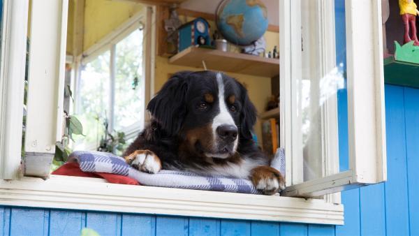 Keks vermisst seinen Nachbarn.   Rechte: ZDF/Zia Ziarno