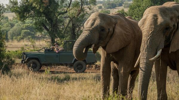 Elefanten, endlich! Es sind die ersten, die Fritz (Guido Hammesfahr) und Nandi (Sohela Oliphant) bei der Wildtierzählung sehen. | Rechte: ZDF/Emil Wessels