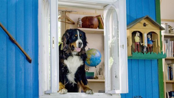 Keks schaut seinem Herrchen interessiert bei der Arbeit zu. | Rechte: ZDF/Antje Dittmann
