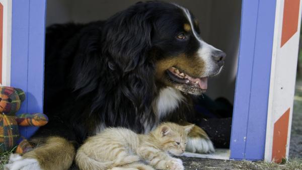 Dicke Freundschaft - Keks und das Kätzchen mögen sich. | Rechte: ZDF/Antje Dittmann