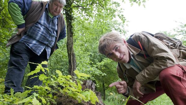 Ein Versteck unter einem Baumstumpf? Beim Geocaching erforscht Fritz (Guido Hammesfahr) leideschaftlich die Natur, während der Herr Nachbar (Helmut Krauss) langsam ungeduldig wird. | Rechte: ZDF/Antje Dittmann