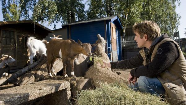Fritz Fuchs (Guido Hammesfahr) hilft im Tierpark aus. Das Herz der kleinen Ziege hat er schon mal gewonnen. | Rechte: ZDF/Antje Dittmann