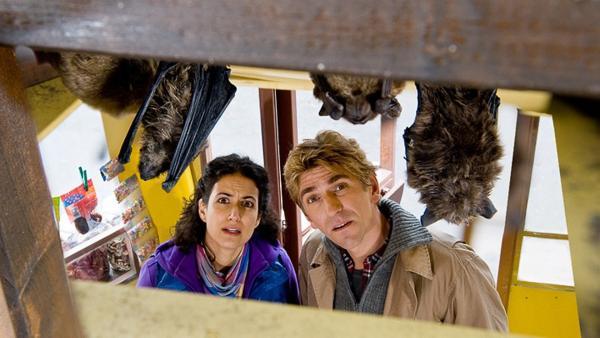 Eine Fledermausfamilie sucht Asyl. Was sollen Fritz (Guido Hammesfahr) und Yasemin (Sanam Afrashteh) mit den Tieren machen? | Rechte: ZDF/Antje Dittmann