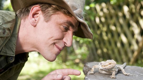 Woher kommst du denn? Fritz (Guido Hammesfahr) beobachtet eine Bartagame, die sich plötzlich in seinem Garten sonnt. | Rechte: ZDF/Antje Dittmann