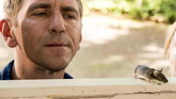 Fritz Fuchs (links) und seine Cousine (rechts) blicken von außen durch einen offen stehenden Bilderrahmen in den Bauwagen. Auf dem Rahmen balanciert eine Maus, die von den beiden beäugt wird.   Rechte: ZDF