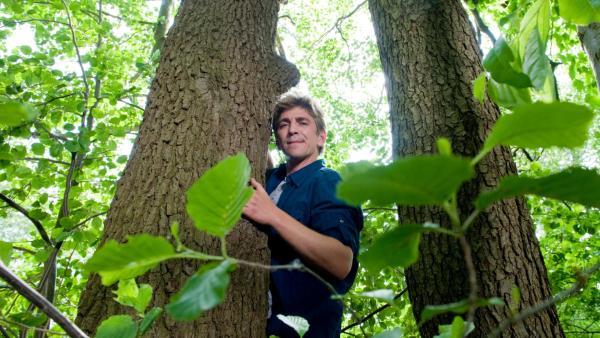 Fritz im Wald | Rechte: ZDF