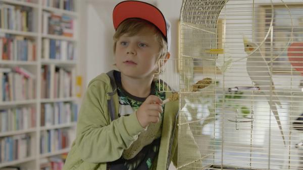 Hugo (Petter Mortensen)  Hugo (Petter Mortensen) kümmert sich um Pablo, den Nymphensittich seiner Oma. | Rechte: WDR/NRK Super/Beta Film GmbH