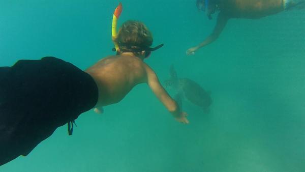 Mit ihrem Freund Brian tauchen Merla und Leo unter Wasser um am Meeresgrund mit den Schildkröten zu schwimmen. | Rechte: SWR/Tonix Pictures GmbH