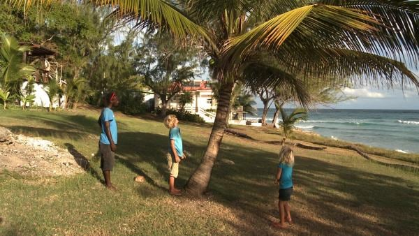 Wie bekommt man nur die Kokosnuss von der Palme? | Rechte: SWR/Tonix Pictures GmbH