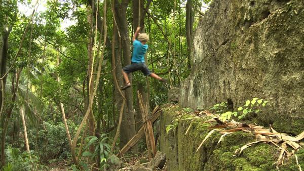 Leo schwingt gekonnt an einer Liane durch den Dschungel. | Rechte: SWR/Tonix Pictures GmbH
