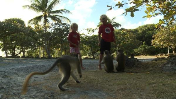 Vorsicht! Die Affen sind sehr frech! | Rechte: SWR/Tonix Pictures GmbH