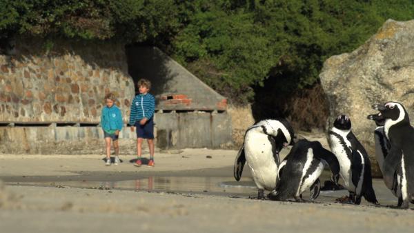In Südafrika entdecken Merla und Leo kleine Pinguine. | Rechte: SWR/Tonix Pictures GmbH