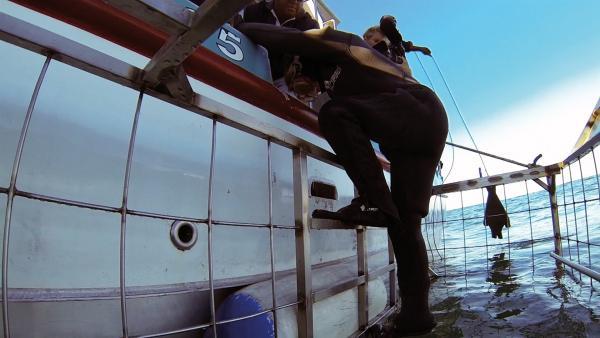 Merla und Leo wollen es genau wissen. Wie sehen Haifische aus der Nähe aus? In einem Stahlkäfig gehen die Kinder auf Tauchstation. | Rechte: SWR/Tonix Pictures GmbH
