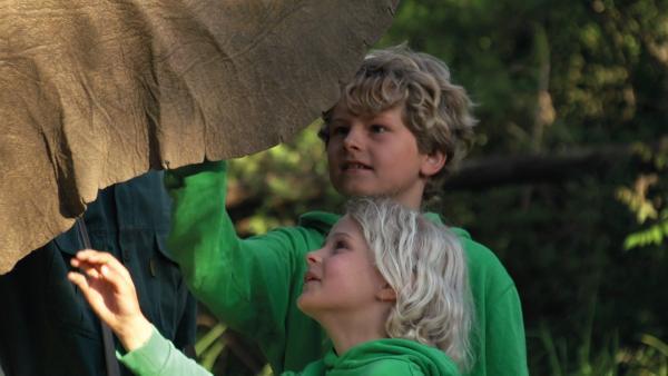 Elefanten und Krokodile sind ja nun wirklich keine Kuscheltiere, aber Merla und Leo wagen sich ganz dicht dran. | Rechte: SWR/Tonix Pictures GmbH